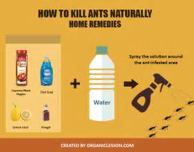5 effective ways to naturally get rid of ants