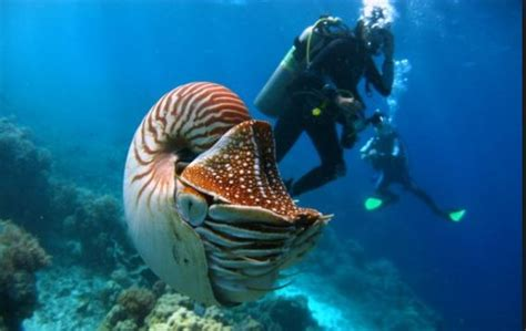 best dive spots in the world 10 of the best scuba diving spots in the world