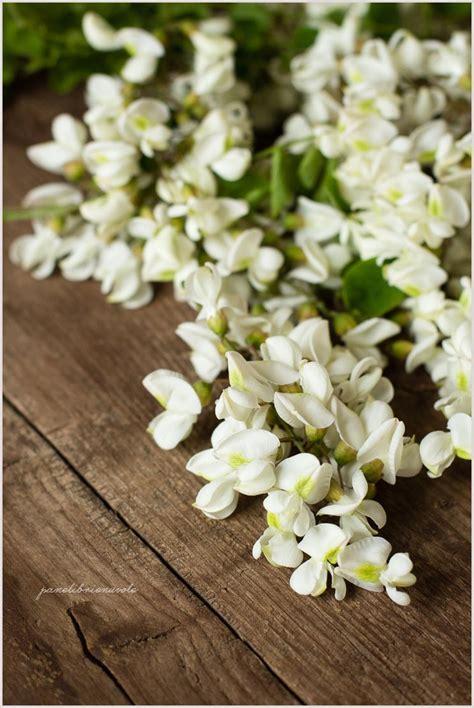 fiori acacia frittelle di fiori di acacia panelibrienuvole