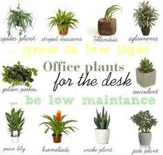Best Plants For Office With No Windows Ideas 1000 Ideas About Office Plants On Best Office