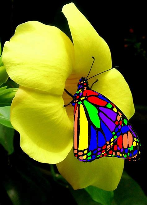 colorful butterflies real colorful butterflies on flowers www imgkid