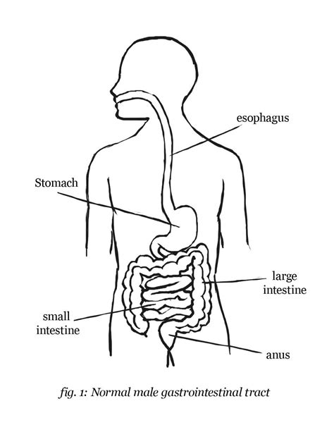 anatomy coloring book digestive system digestive system coloring page coloring home
