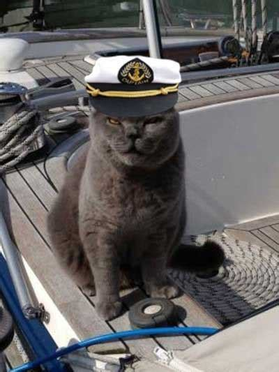 captain cat captain buxton the nautical cat missing from yacht metro news