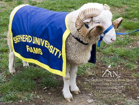 shepherd rams zan the shepherd rams mascot homecoming