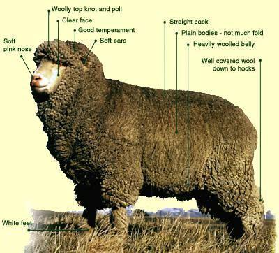woolen diversions: ss: polwarth