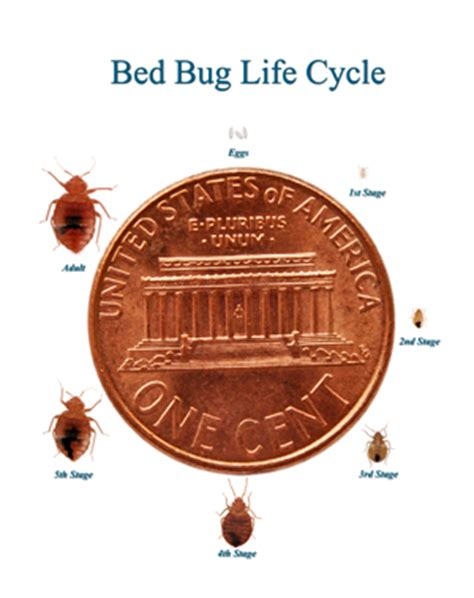 can you feel bed bug bites don t let the bedbugs bite wild about travel