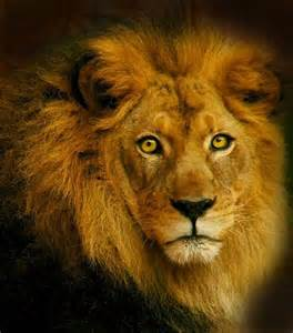 25 beautiful animal portraits