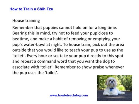 how to house a shih tzu how to a shih tzu