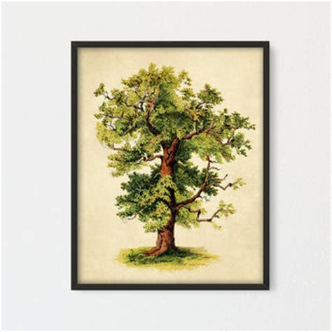Wall Decor Printed Poster Poster Kayu Oak Tree best botanical books products on wanelo