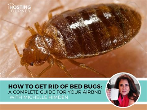 Airbnb Bed Bugs by How To Get Rid Of Bed Bugs A Complete Guide For Your Airbnb