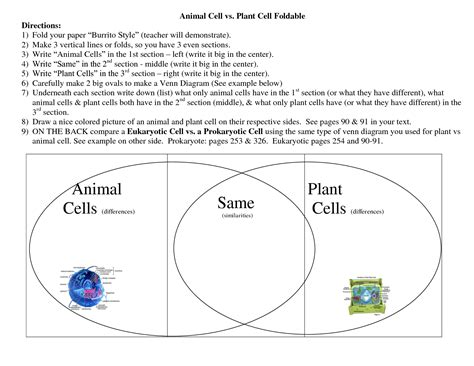 diagram of plant cell and animal cell animal and plant cell venn diagram