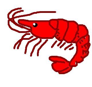 camarão desenho de naytiisuzuki gartic