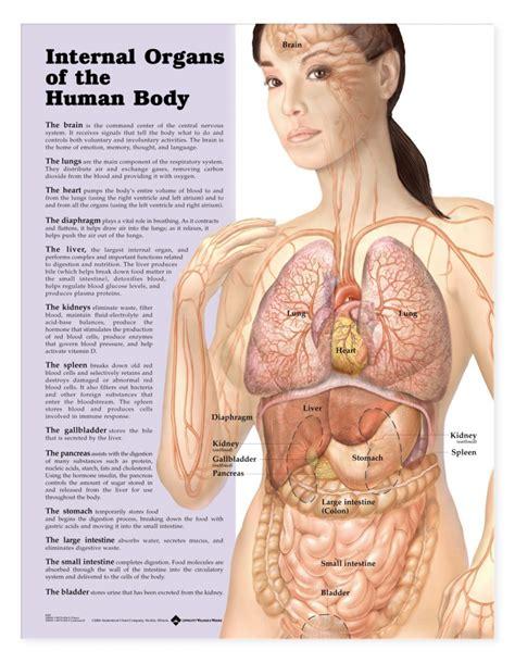 diagram of the human and organs human organs diagram human anatomy diagram