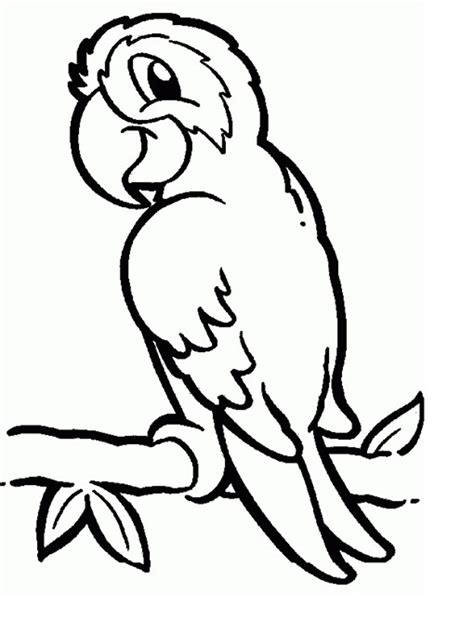 coloring image parrot parrots coloring pages to and print for free