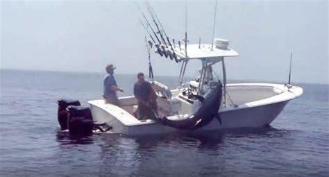 tuna fishing boat jobs monster 712 pound tuna almost flips the fishing boat