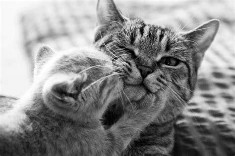 gatti tappezzeria 4zedisimpatia quanti sono i tuoi perch 232 sui gatti