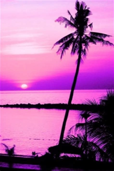 pink palm tree wallpaper gallery