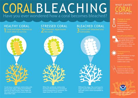 coral bleaching diagram new photos show the rapid pace of great barrier reef