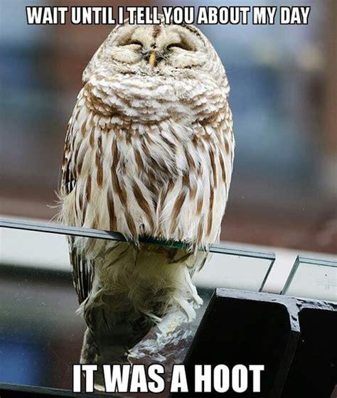 Owl Meme - owl meme hoot wait memes comics pinterest owl