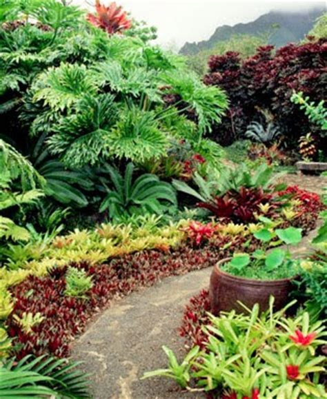 Bromelia Tanaman Hias Fall In M sentuhan bromelia mewarnai landscape taman pertanian