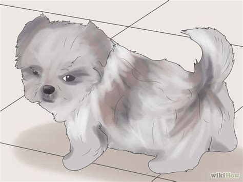 potty shih tzu puppy how to potty a shih tzu 6 steps with pictures wikihow