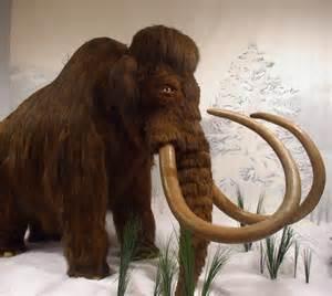 woolly mammoth animal wildlife