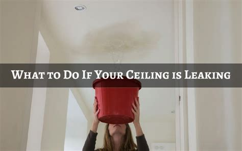 What To Do If Your Ceiling Is Leaking by What To Do If Your Ceiling Is Leaking Idea Express