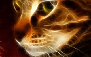 Cat Lighting Cat Light Wallpaper Animal Wallpaper