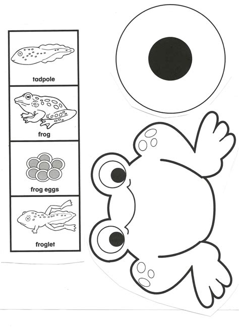frog eggs coloring page frog life cycle pdf google drive school ideas