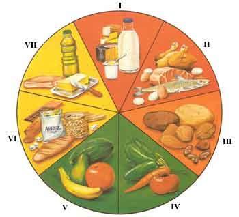 maqueta primer grado de los alimentos origen animal y vegetal la combinacion de los alimentos