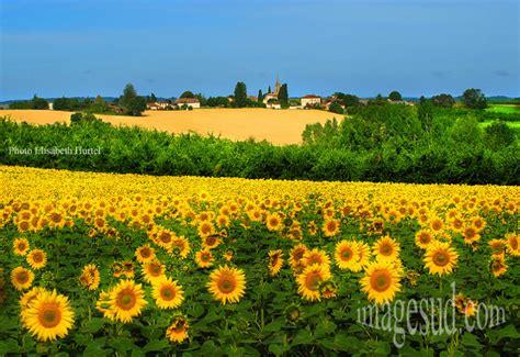 Beaux Jardins Privés by Paysage Tournesols Aquitaine Tirage P2 3956