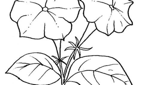 disegni da stare e colorare fiori disegni di fiori da stare disegni da colorare farfalle e