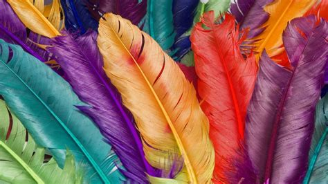 colorful feather peacock feather wallpaper 13483