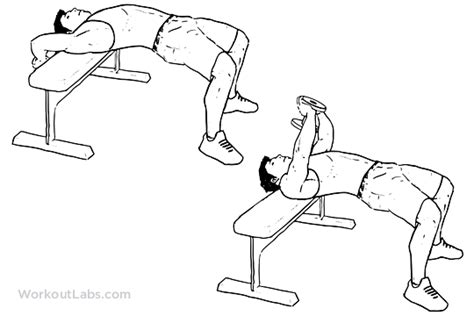Abs Bench Exercises Dumbbell Pullover Illustrated Exercise Guide Workoutlabs