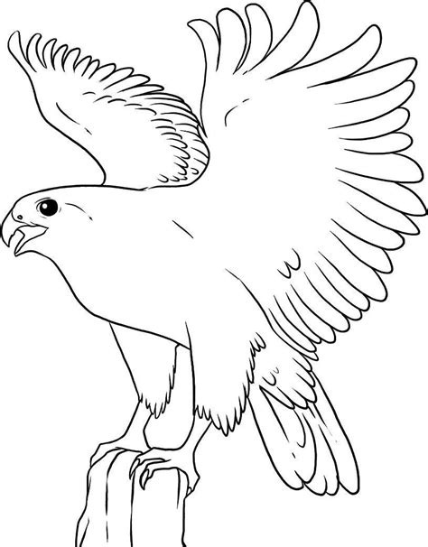 coloring page falcon bird flying falcon bird coloring pages alphabet coloring