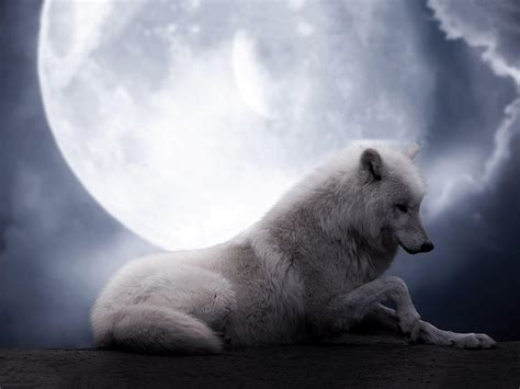 wolf howling wallpapers wallpaper cave