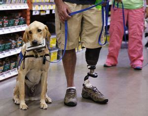 learn to service dogs program pairs service dogs with health care system the seattle times