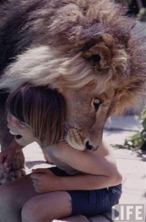 lions home news dumper sweet home