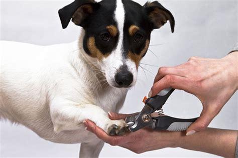 wann sind hunde in der pubertät krallen k 252 rzen wenn ja wann hunde