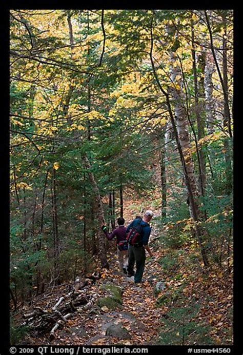 picture/photo: hikers descend steep trail in forest