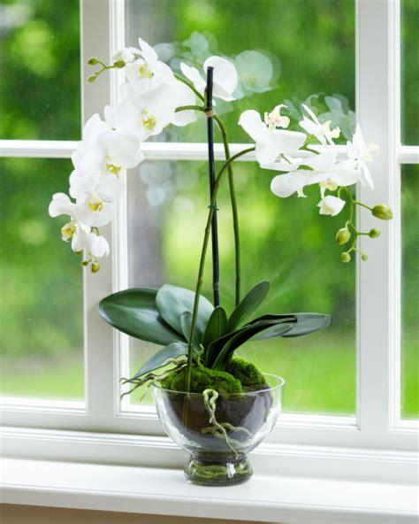 easy indoor flowers best indoor plants easy plants to grow