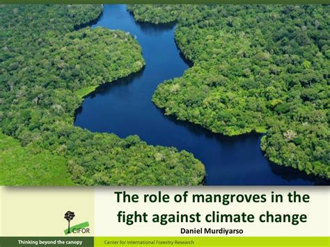 the of the one s fight against an unjust system books the of mangroves in the fight against climate change