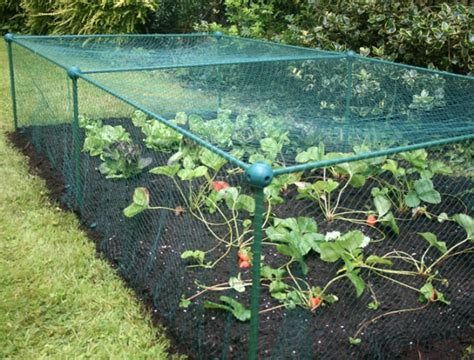 Vegetable Cages Butterfly Netting Brassica Crop Netting For Vegetable Gardens