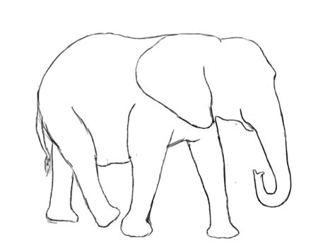 how to draw a doodle elephant how to draw an elephant draw central
