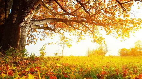 tree background hd photos autumn tree hd wallpapers