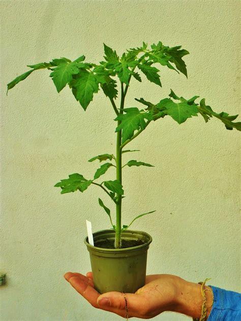bio garten gmbh bio jungpflanzen bio garten sterkl