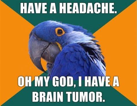 Paranoid Parrot Meme - paranoid parrot is paranoid merry blog go round