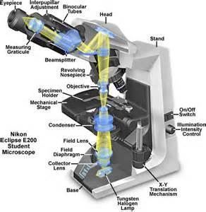 molecular expressions microscopy primer microscope components nikon eclipse e200 microscope