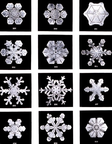 snowflake bentley snow wikimedia commons