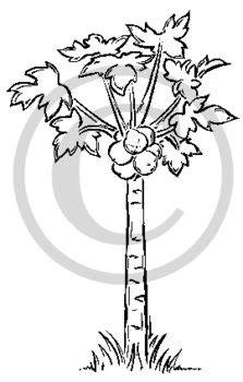 Papaya tree clipart black and white 1 » Clipart Station
